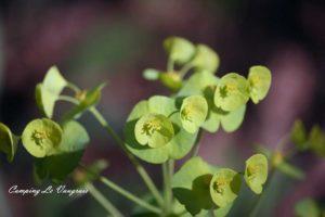 la flore variée du massif du Fierloz